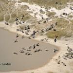 Makgadikgadi & Kalahari Desert Elephant Collarings