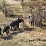Goodbye wishes to Elephant Ambassadors…