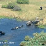Wetlands Wildlife Count in Namibia