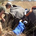 Elephant Range Expansion Study update
