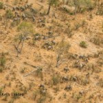 Okavango Panhandle aerial survey 2010