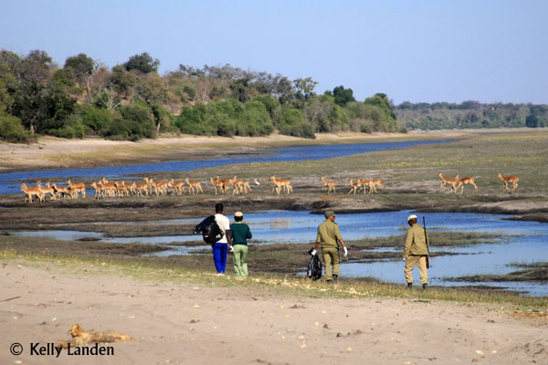 Chobe river bank clean up, a success!