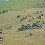 EWB's Aerial Survey of Mammoth Importance