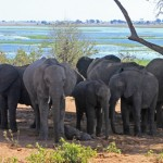 Elephant Herd Assessments by Puget Sound Students