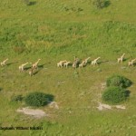 Chobe Forest Reserves Surveys Completed