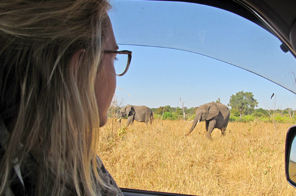 One never gets accustomed to the wonderful feeling of watching elephants at the roadside!