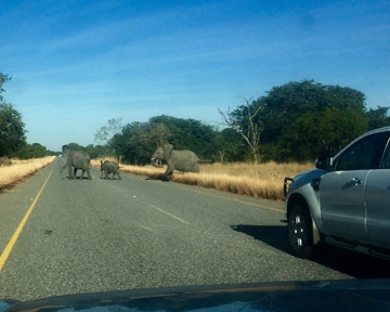 It is not uncommon for traffic to be held up by elephants crossing the roads in the area